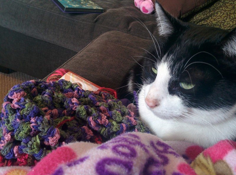Steve approves of the blanket I'm crocheting.