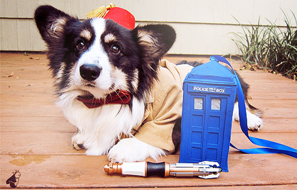 Pudge the Corgi, dressed as the 11th Doctor from Doctor Who.